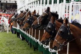 MobileLearning_horseRace